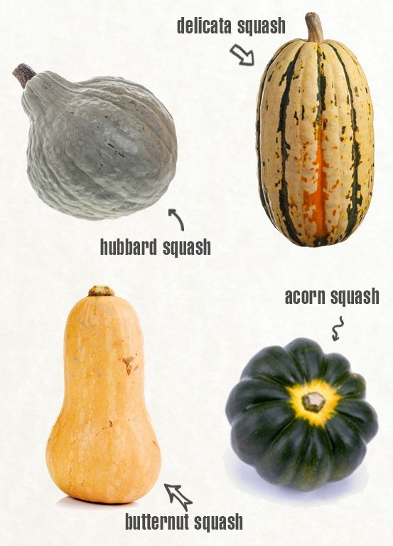 Image: Getty Butternut, Acorn & Winter Squash for Baby Food – Introducing Squash to Baby: (4)6-8 months old  While the recommended age for starting solid foods is generally 6 months of age, many babies start solids between 4 and 6 months of age. These recipes are appropriate for this age range. Winter Squash, like butternut squash …