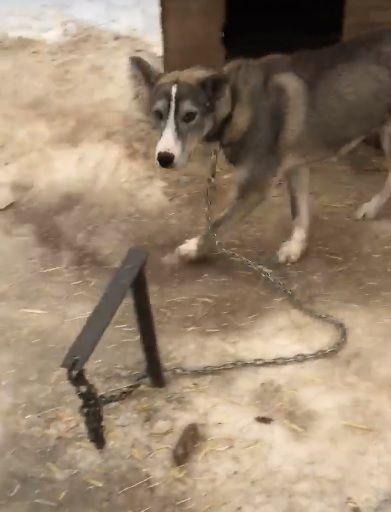 [Video] Toronto Adventures Inc Responds To Videos Of Tied Up Dogs – Z103.5 https://cstu.io/425b7b #Dogs #Puppy #CuteDogs #CutePuppies #CutePuppy