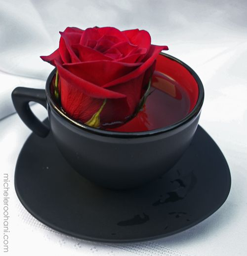 For my darker side :) Red Rose in a Black Tea Cup. - fairies and vampires