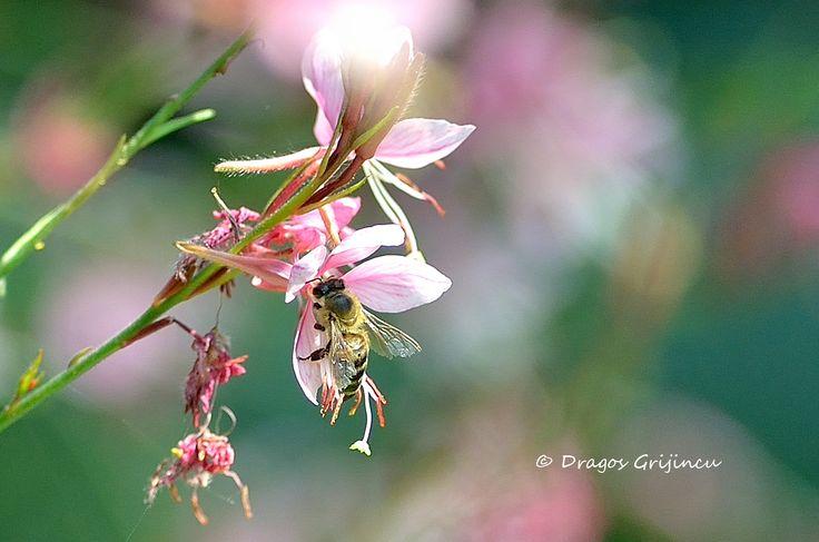 Albinuta pe o floare