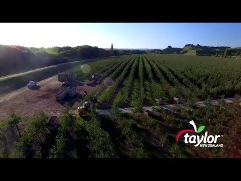Great Things Grow Here |   Taylor Corp; Apple Growers For 100+ Years