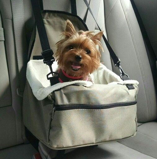 In Her Car Seat