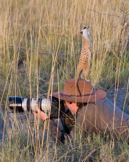 The famed Makgadikgadi Meerkats love climbing on guest's heads