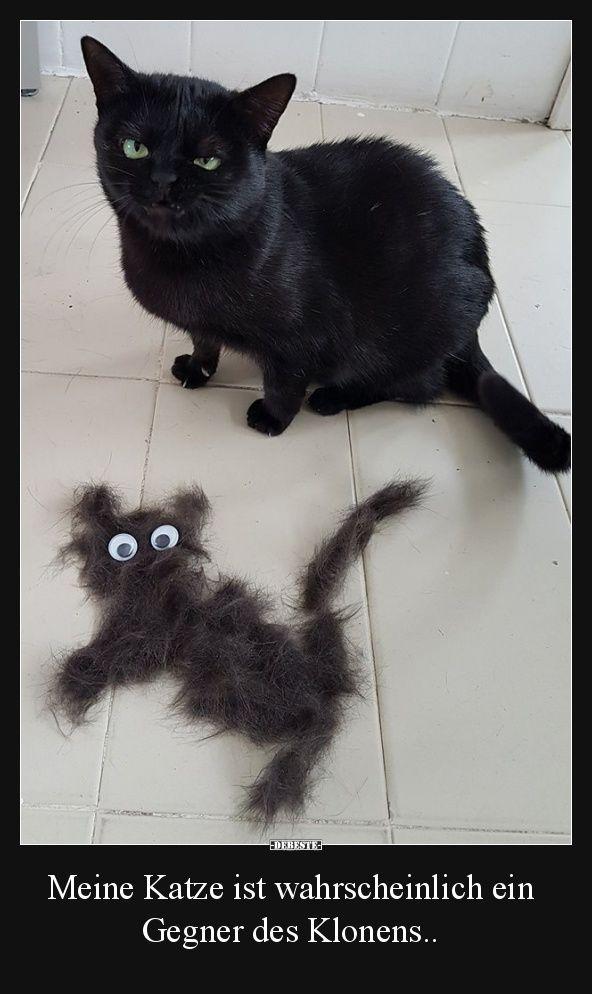 Meine Katze Ist Wahrscheinlich Ein Gegner Des Klonens Lustige