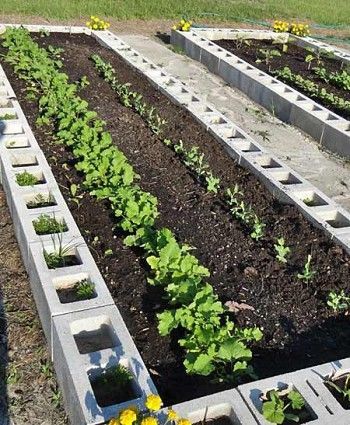 An Alternative To Treated Lumber Is Using Concrete Blocks To Make Raised Beds Edging Stones