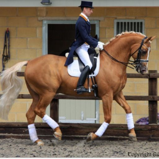 Welcome to Dressage Today Online