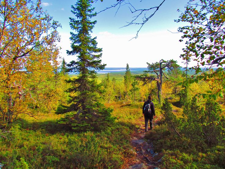 Hiking on the fjell of Pyhitys, Taivalkoski, Kuusamo Lapland, Finland