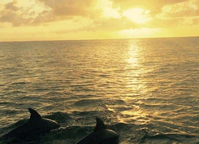 Ponta dolphin sunrise