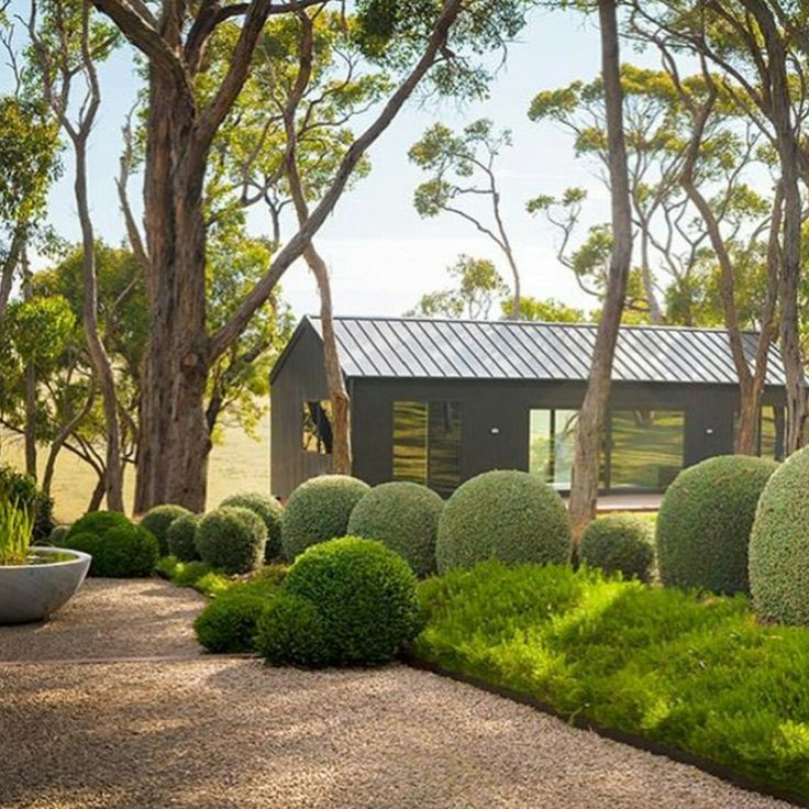 mix of shapes of boxwood & other shrubs
