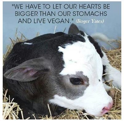 """""""We have to let our hearts be bigger than our stomachs and live vegan."""" (Roger Yates)"""