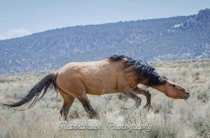 snaking horse behavior | Snaking
