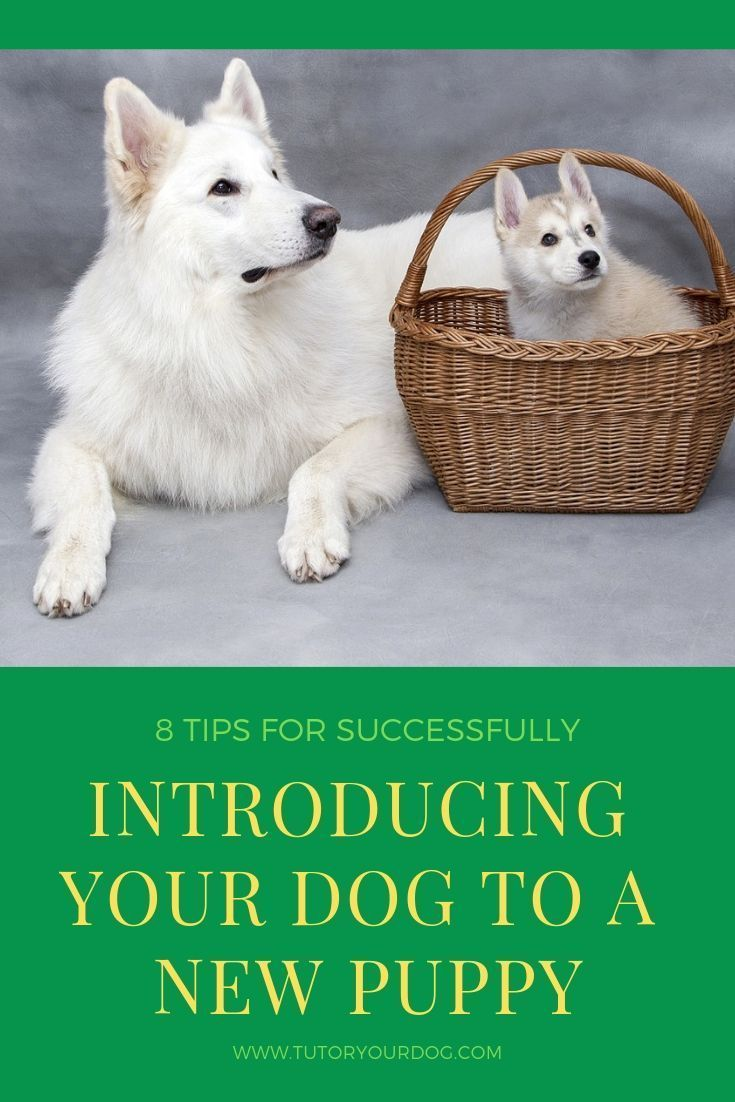 8 Tips For Successfully Introducing Your Dog To A New Puppy