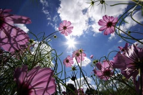 sun, summer