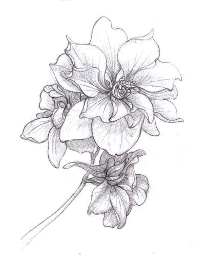 Larkspur - Tattoo for Shoulder Cap - July Birth Flower