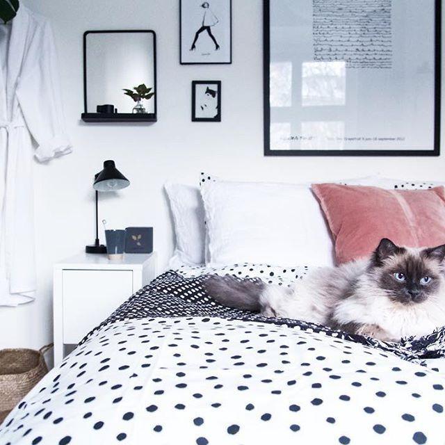 #Astridkatt godkänner nya sängkläderna 🖤🐱 #birma #ragdoll #sängkläder #sovrum #bedroom #interior4all #inredningstips #homedecor #interior123 #interiorforyou #design #finahem #interiordecoration #inredning #heminredning #inspiration #interiordesign #interiorinspo #interior #interior4you #skandinaviskt #interiör #fotografi #scandinavianhomes #mitthem #homedeco #södermalm #sofo #monochromeinterior