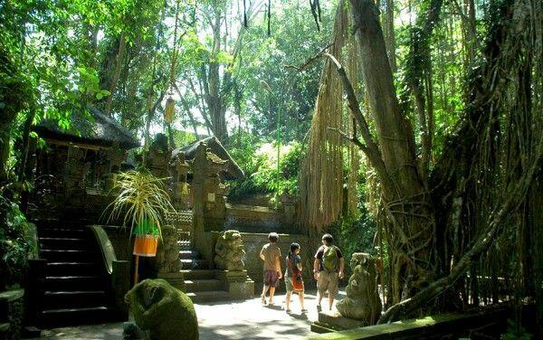 Taman Wanara Wana - Bali