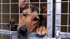 Please set this dog free!