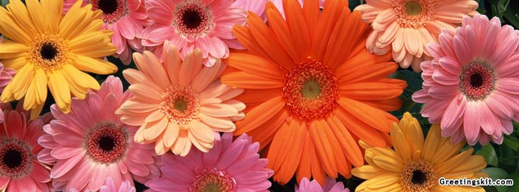 Floral Facebook Covers: 313 Best Images About Facebook Covers/Pictures On