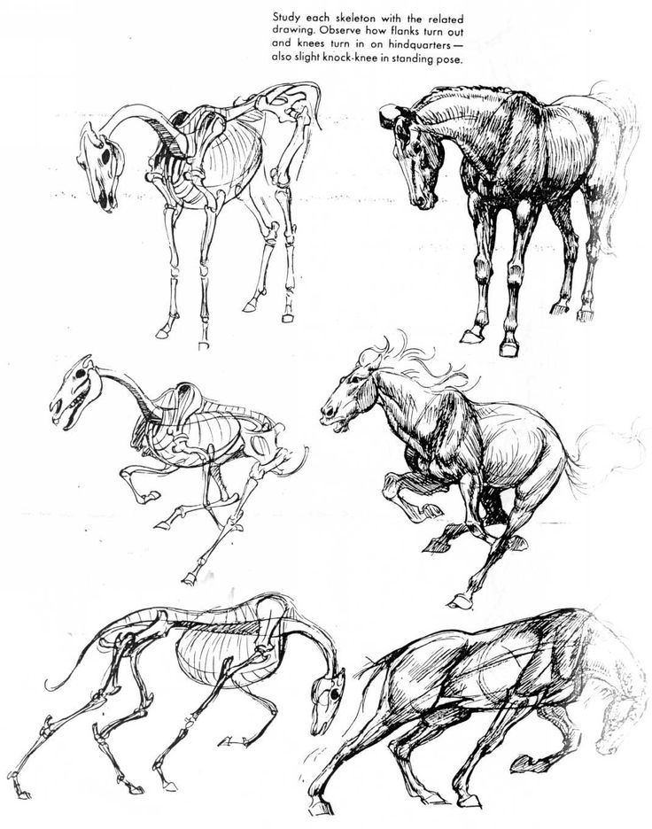Shows how to draw a horse in different poses