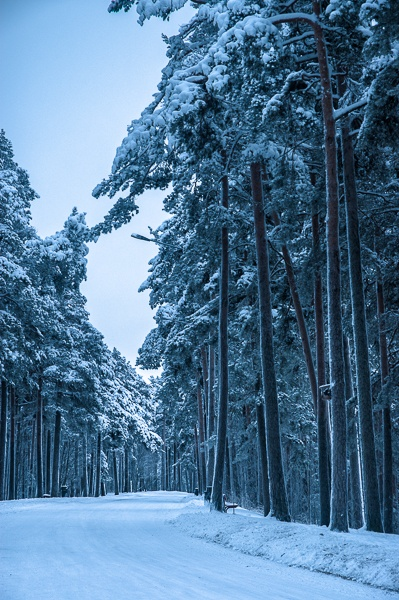 Winter forest. Tampere, Finland. #Tampere #Finland #Winter