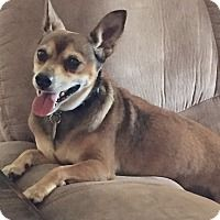 Adopt A Pet :: Rusty - Fort Myers, FL