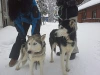 Saija Lodge Sled Dog Blog: Saija´s seniors