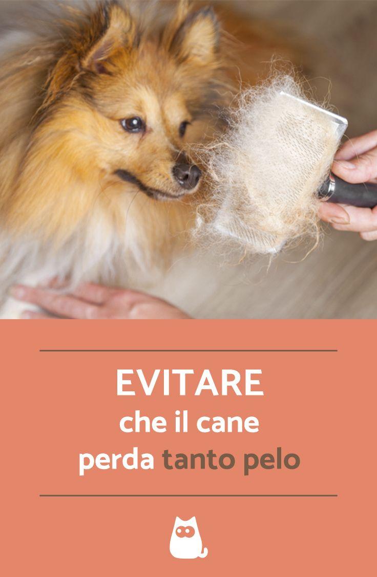 Evitare Che Il Cane Perda Molto Pelo Pets Dogs Il Cane E Pets