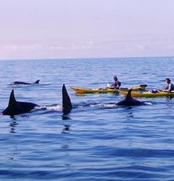 Three Day San Juan Islands Kayak Trips: Orca Whale Watching Tours - Seattle Washington