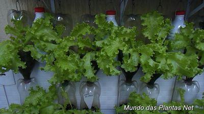 Mundo das Plantas : Horta com Garrafas Pet, Irrigação Automática