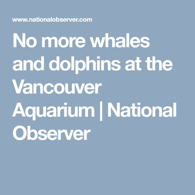 No more whales and dolphins at the Vancouver Aquarium | National Observer