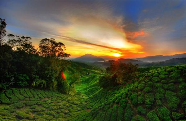 Cameron Highlands, Maleisie