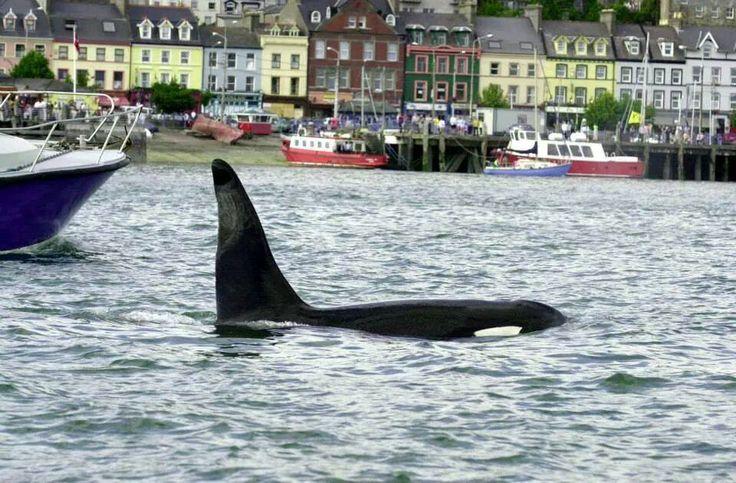 Whale In Cobh Rk Ireland Pinterest Whales