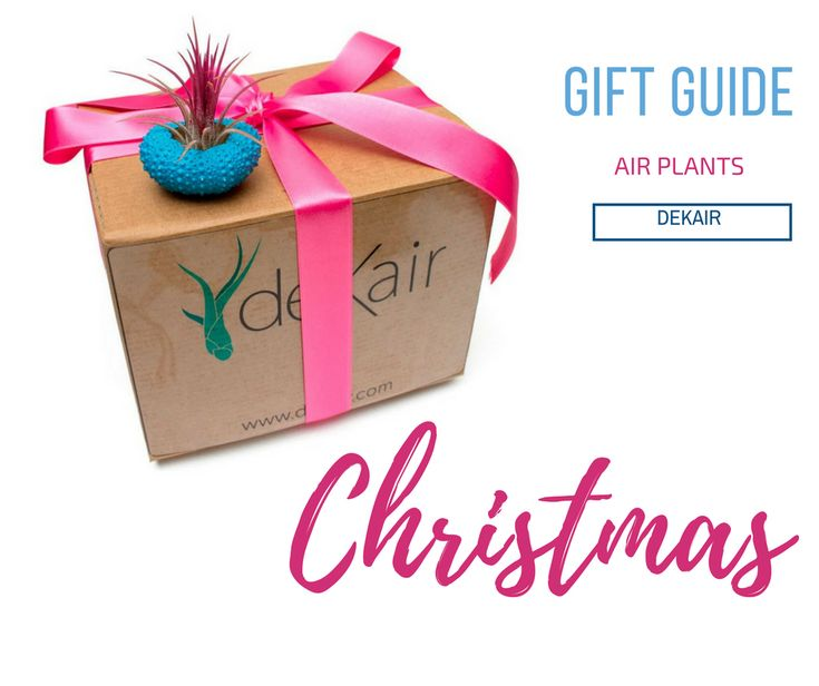 If you want to surprise this #Christmas with an original and beautiful #gift, we encourage you to read the next post from our blog  ➡ https://www.dekair.com/en/blog/post/7-reasons-why-air-plants-will-make-the-perfect-gift-this-christmas  Spread #love, give #AirPlants 🌷