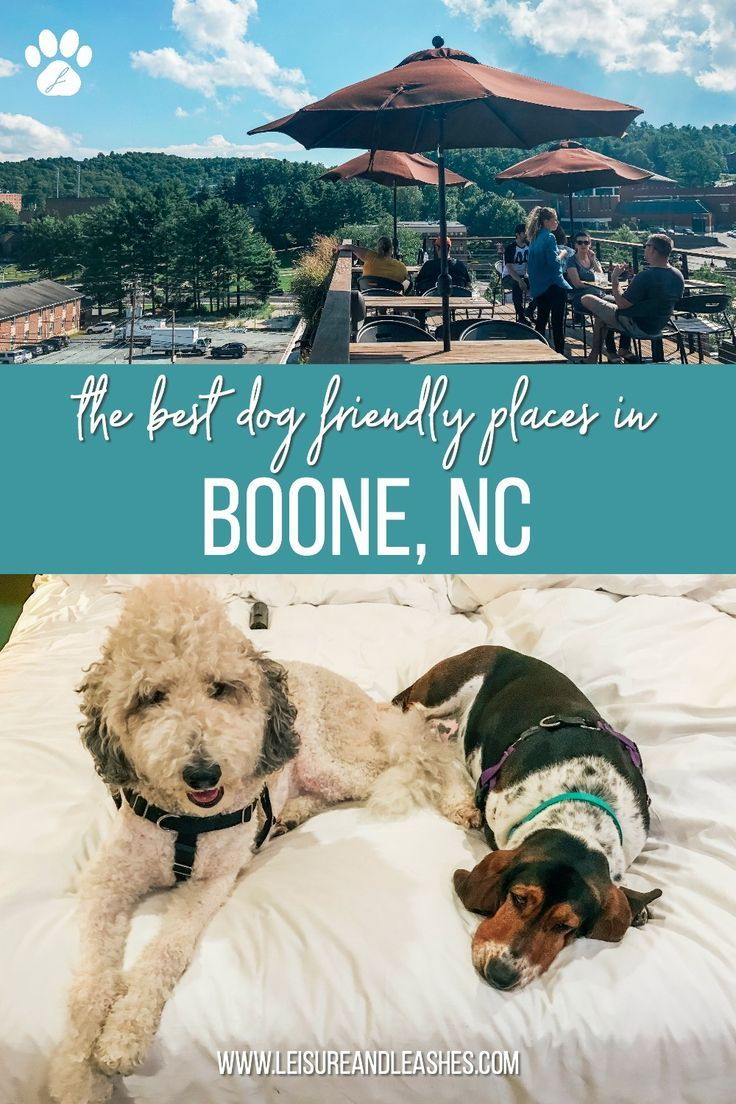 The 4 Best Dog Friendly Places In Boone Nc Dog Friends Dog Travel Best Dogs