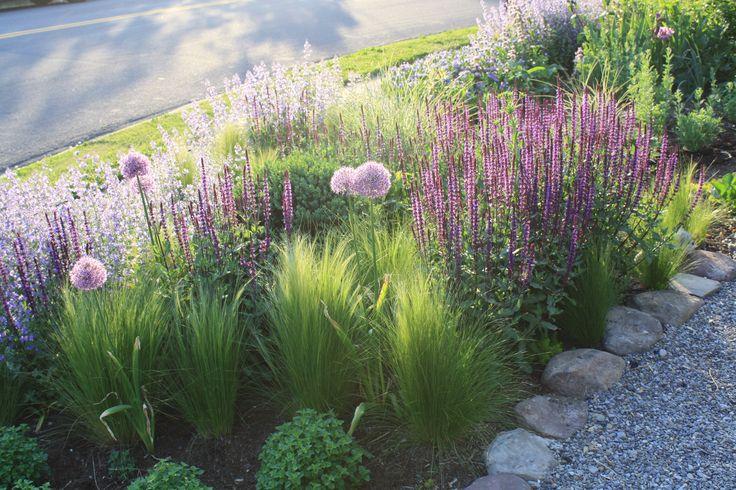 Nasella tenuissima, Salvia Caradonna, Nepeta 'Walker's Low' and Allium 'Purple Sensation' in Thomas Rainer garden