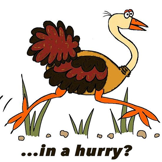 Ostrich, in a Hurry!