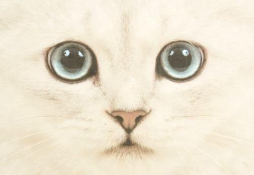 Ojos hermosos!