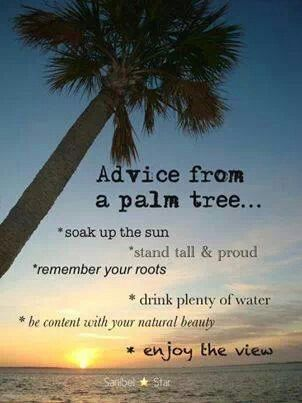 Advise from a palm tree