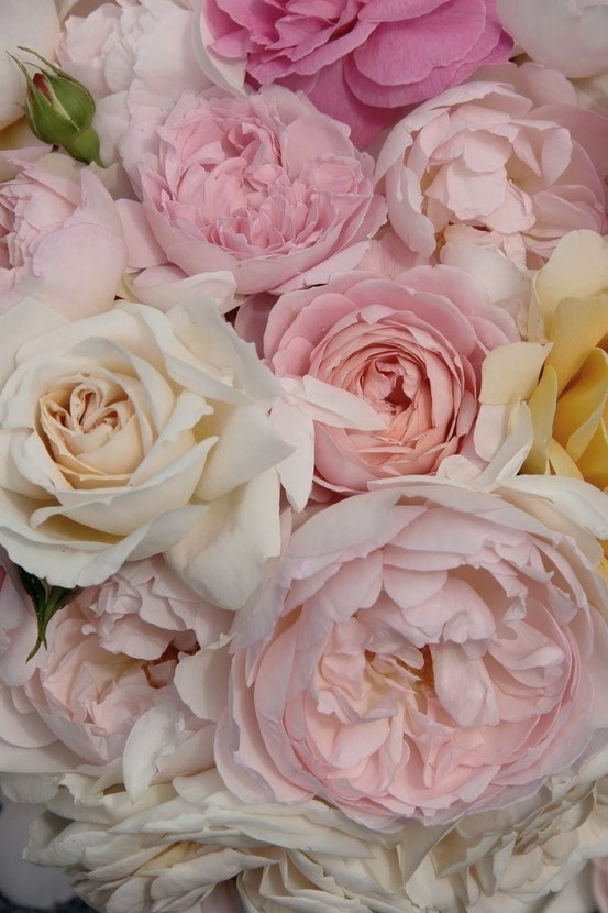 ~~○Roses and Peonies pretty in pink○~~