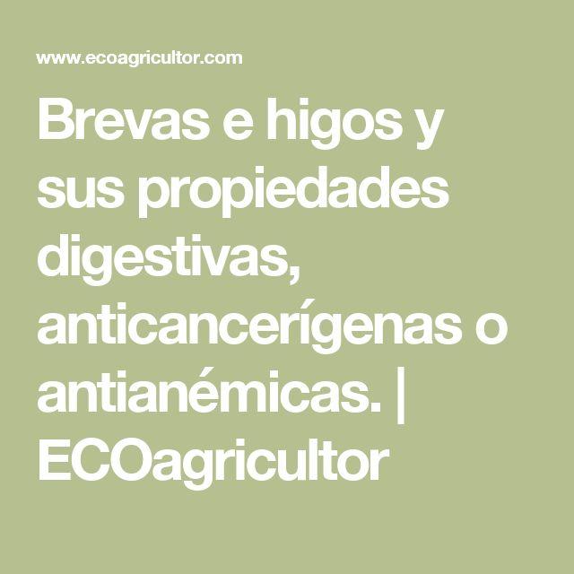 Brevas e higos y sus propiedades digestivas, anticancerígenas o antianémicas. | ECOagricultor