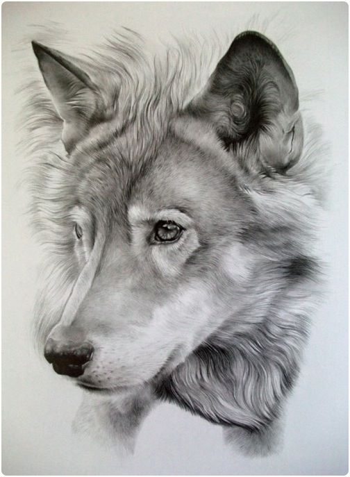 realistic-pencil-drawings-of-animals-10 - Snappy Pixels