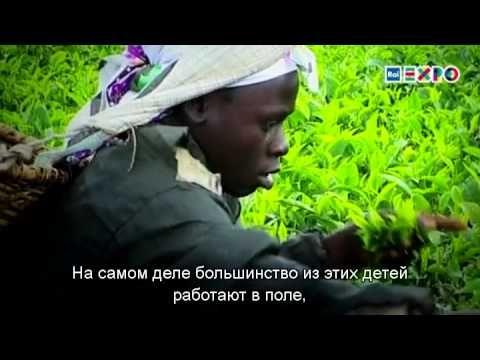 Детский труд используется не только на фабриках 98 миллионов детей работают на полях, на животноводческих фермах и в рыболовецких артелях. Чтобы победить мировой голод, нужно победить детский труд?