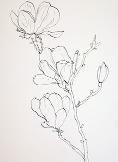 dragonfly drawings with magnolias - Google Search