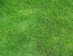 Ein schöner Raser will gepflegt sein. Wann es Zeit zum Mähen wird, das können Sie problemlos erkennen. Aber: Wann und wie oft sollten Sie Ihren Rasen...