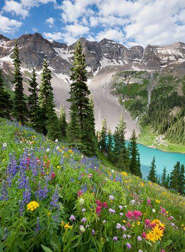 Wildflowers above blue lake, Sneffles range, San Juan mountains, Durango