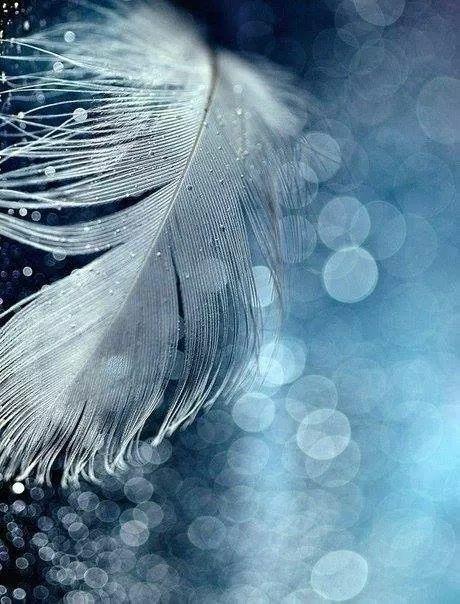 La tua voce..........le tue parole, sono dolci carezze che penetrano la pelle e giungono a luogo ove sono destinate..........TAT