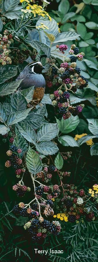 Brambles and Brass Buttons by Terry Isaac