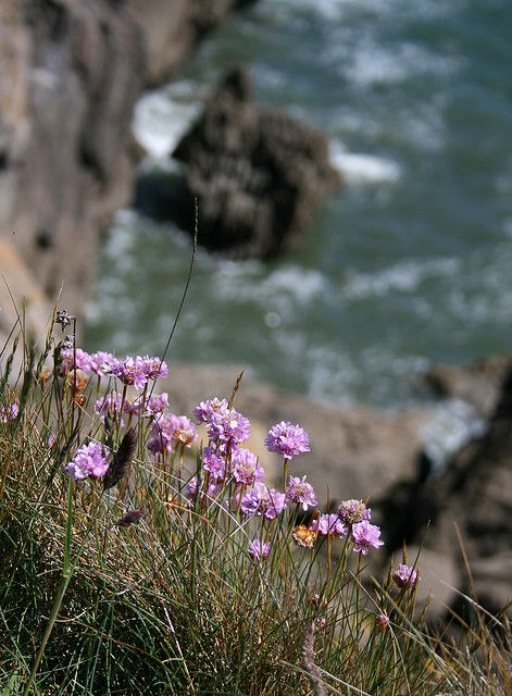 Spring flowers on the coastal path