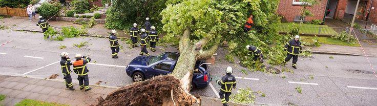 Eine umgestürzte Eiche liegt in Hamburg-Lohbrügge nach einem starken Unwetter über der Straße und begräbt Autos unter sich. | Bildquelle: dpa
