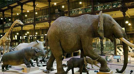 Sortie enfant Paris: Muséum National d'Histoire Naturelle